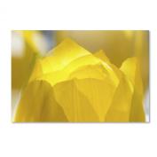 Trademark Fine Art Yellow Tulip Double Exposure Artwork by Kurt Shaffer, 41cm by 60cm