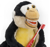 Kids Monkey Educational Plush & Toothbrushes (5 Pack)