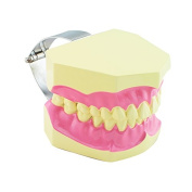 Carejoy(TM) Dental Demonstration Dentist Teeth Gum Teaching Model With Toothbrush Teaching Model