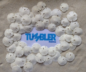 50 Pcs Small Natural White Sand Dollars - Tumbler Home Certified - Wedding - Sea Shell Craft 1.3cm - 2.5cm - Hand Picked and Professionally Packed