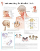 Understanding the Head & Neck Paper Poster