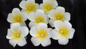 20 piece EVA Pearl Plumeria Hair clips Rubra Hawaiian Fake Artificial Flowers for Wedding/Party/Home /prom Hair Jewellery Decor