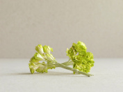 10mm Lime Green Paper Gypsophila - 20pcs - Mulberry Paper Flowers with Wire Stems - Great for Miniature Flower Arrangement