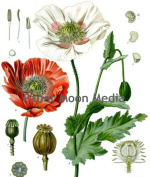 Vintage Botanical Flowers Reproduction Printed Art Images
