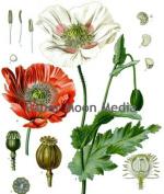 Vintage Botanical Flowers Reproduction Printed Art Images