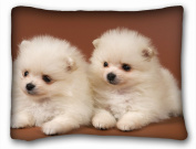 Decorative Standard Pillow Case Animals Evaluation of the pomeranian two White 50cm *70cm One Side