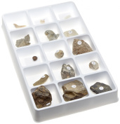 American Educational Types of Fossilisation Collection