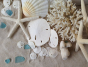 Knobby White Starfish 2.5cm - 4.4cm set of 12 - Tumbler Home Certified - Wedding Seashell Craft - Hand Picked and Professionally Packed ...