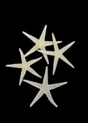 White Baby Starfish, Set of 100