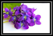 Violet Fragrant Oil for Candle Soap Incense 50ml