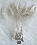 Stripped Coque Feathers, MANY colour OPTIONS, Pack of 25, Millinery and Crafts - by Lamplight Feather, Inc.