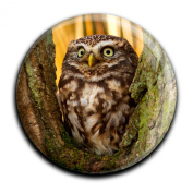 "Magnet in a round shape ""Owl"""