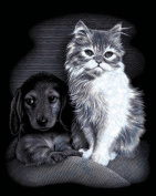 Pet Friends Silver Scraperfoil Kit - 20cm X 25cm - Pet Friends Silver Scraperfoil Kit - 20cm X 25cm . This Fabulous Kit Is Perfect For All The Aspiring Artists! Create A Beautiful Foiled Picture By Scraping