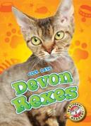 Devon Rexes (Cool Cats)