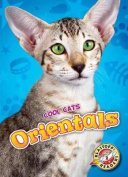 Orientals (Cool Cats)