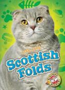 Scottish Folds (Cool Cats)