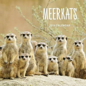 Meerkats 2016 Calendar