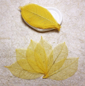 50Yellow Skeleton Leaves Rubber Tree Natural Scrapbooking Craft DIY CARD Wedding