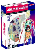 4D Vision 33cm Transparent Human Body