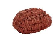 Simulated Body Parts ~ Brain, 1/pkg, Pkg/1