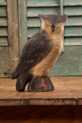 Large Turned Head Velvet Owl