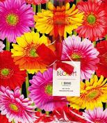 Bloom By Kanvas Fabrics 110cm - 25cm x 25cm Squares 100% Cotton Quilt Fabric