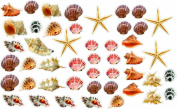 Wall Sticker SMALL Seashells and Starfish colourful Removable and Repositionable (47pcs) love ocean inspired motivational cute Wall Vinyl Art Wall decor sticker decal