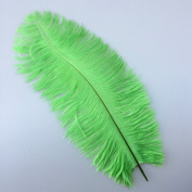 12-14inch 30-35cm Lime Green Natural Ostrich Feather Wedding Party Decoration Pack of 10