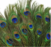 100pcs Lots Real Natural Peacock Tail Eyes Feathers 8-12 Inches / About 23-30cm
