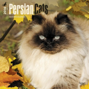 Persian Cats 2016 Square 12x12