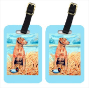 Carolines Treasures 7112BT Chesapeake Bay Retriever Luggage Tags Pack - 2