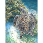 Colour Pencil By Number Kit 22cm x 30cm -Sea Turtle