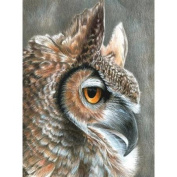 Colour Pencil By Number Kit 22cm x 30cm -Sepia Owl