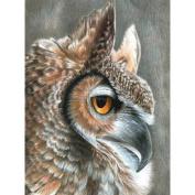 Colour Pencil By Number Kit 22cm x 30cm -Sepia Owl