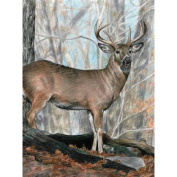 Colour Pencil By Number Kit 22cm x 30cm -Whitetail Buck