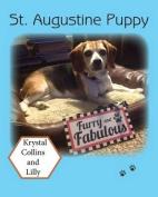 St. Augustine Puppy