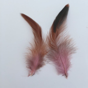 Natural Pheasant Feather Wedding Decoration Pack of 20