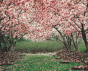 Nature's Finest No. 219 Cross Stitch Pattern Pink Leaves Blossoming in the Forest Cross Stitch Pattern only