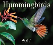 Hummingbirds 2017