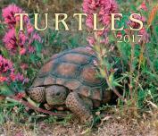 Turtles 2017