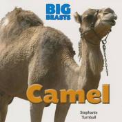 Camel (Big Beasts)