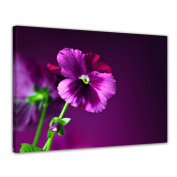 "Bilderdepot24 Wall Art - Canvas Picture ""pansy"" XXL - 80cm x 60cm - Gallery wrapped, directly from the manufacturer"