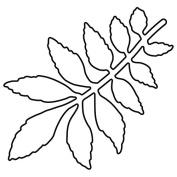 Dreamweaver Die Leafy Branch