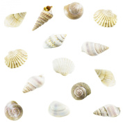 Tiny Miniature Fairy Garden Beach Critter Seashells Marine Life Collection for Art & Craft Project, Outdoor & Indoor Home Decoration, Party Favour, Invitation (130ml Bag, 500 Shell) by Super Z Outlet®