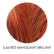 Umberto Beverly Hills U Colour 6.66 - Red Mahogany Bri