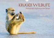 Kruger Wildlife 2016