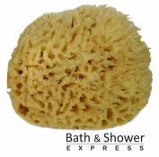 Sea Wool Sponge 15cm - 18cm (X-Large) by Bath & Shower Express ® Natural Renewable Resource!