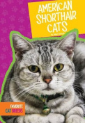American Shorthair Cats