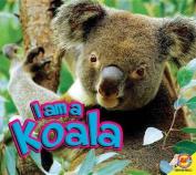 I Am a Koala (I Am)