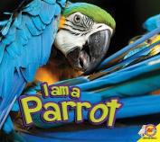 I Am a Parrot (I Am)